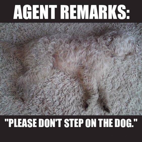 DogCarpet