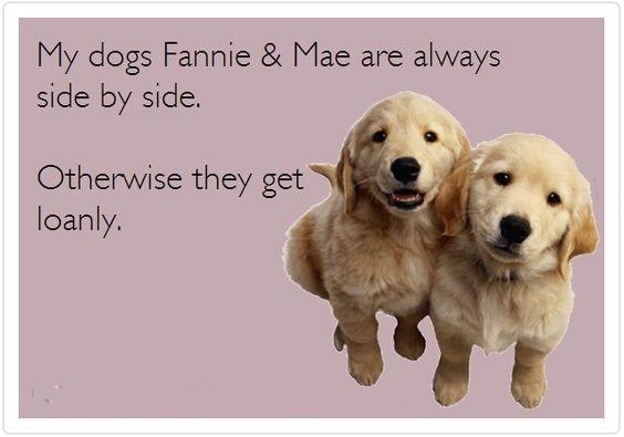 Reeal Estate Puppies.jpg